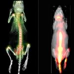 Hire spect Animal Imaging